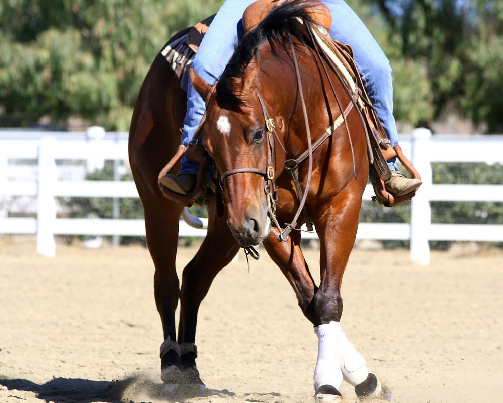 horseback riding 3