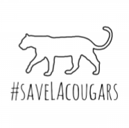 Our Newest Project: #SaveLACougars Capital Campaign