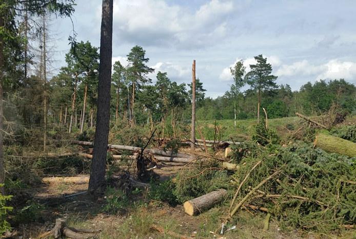 Tornado in Stüde bestätigt