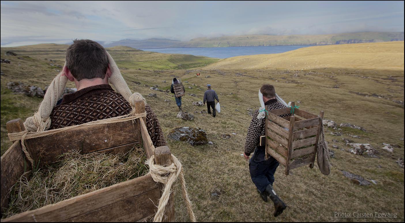 Transporting fulmar eggs