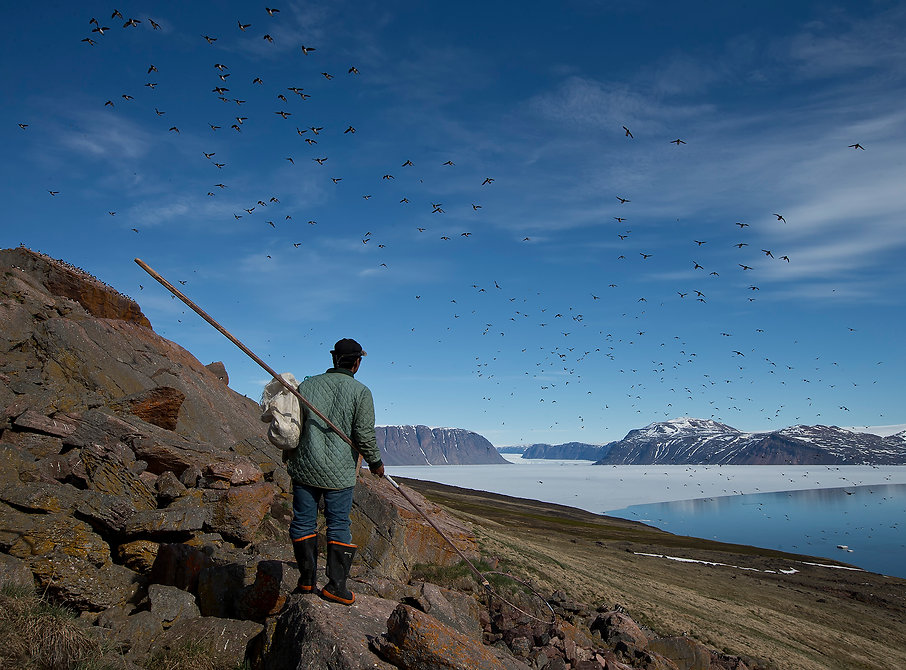 Littke Auk hunting, Siorapaluk