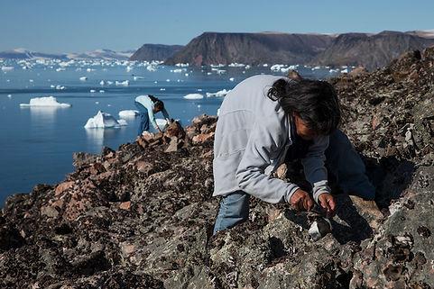 Littke auk harvesting, Savissivik, Thule, Greenland.