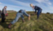 eider down harvesting