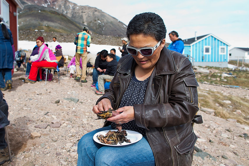 Eating kiviaq (Little Auk) in Siorapaluk