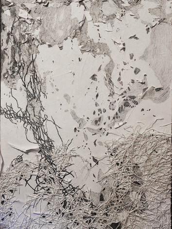 """""""Archipelago of a tree's life"""""""