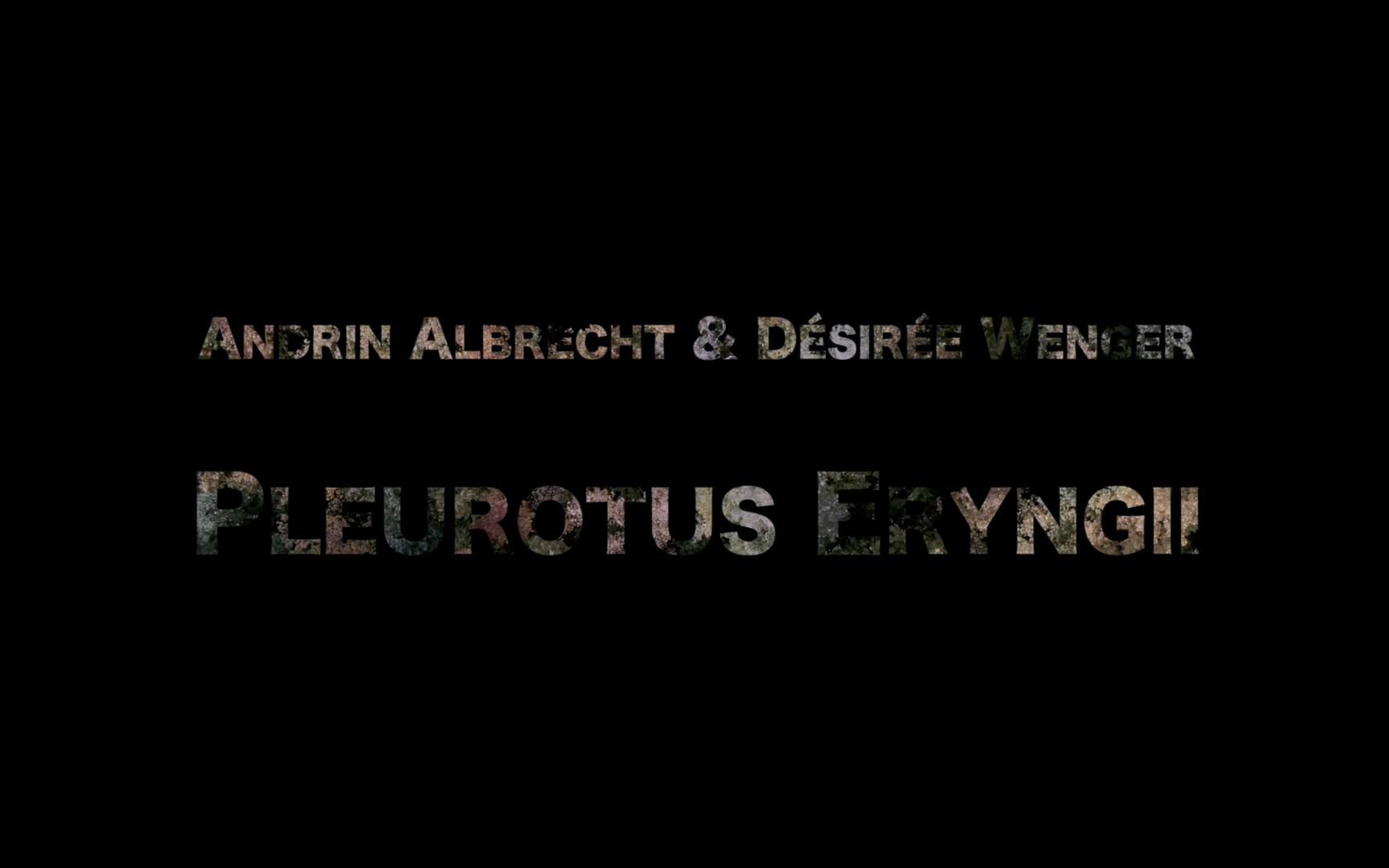 Pleurotus Eryngii