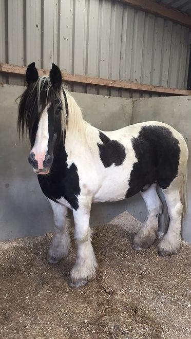 My horse Monty