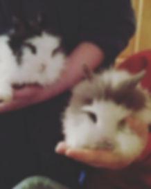 Sam's rabbits