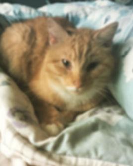 My cat Theodore