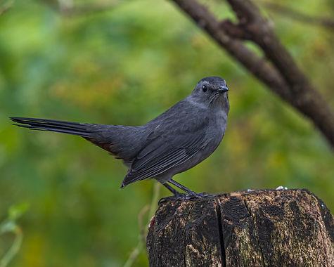 Bird on a tree branch