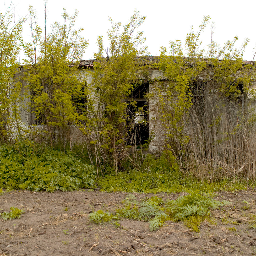The Abandoned School Project.jpg