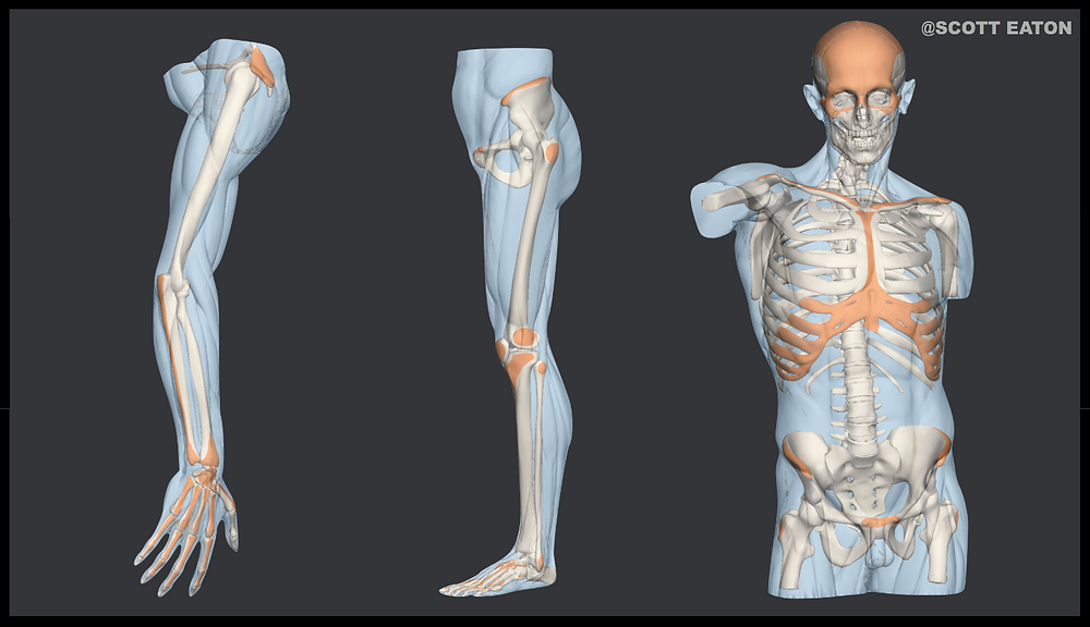 William gabriele character rigger td - How a geometric skeleton can help your Maya joint placement layout