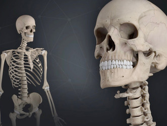 In Rigging: How a geometric skeleton can help your Maya joint placement layout?