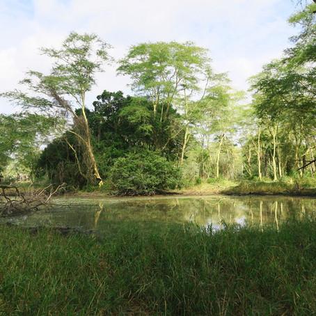 Cartographie des drones dans le parc national de Gorongosa, Mozambique
