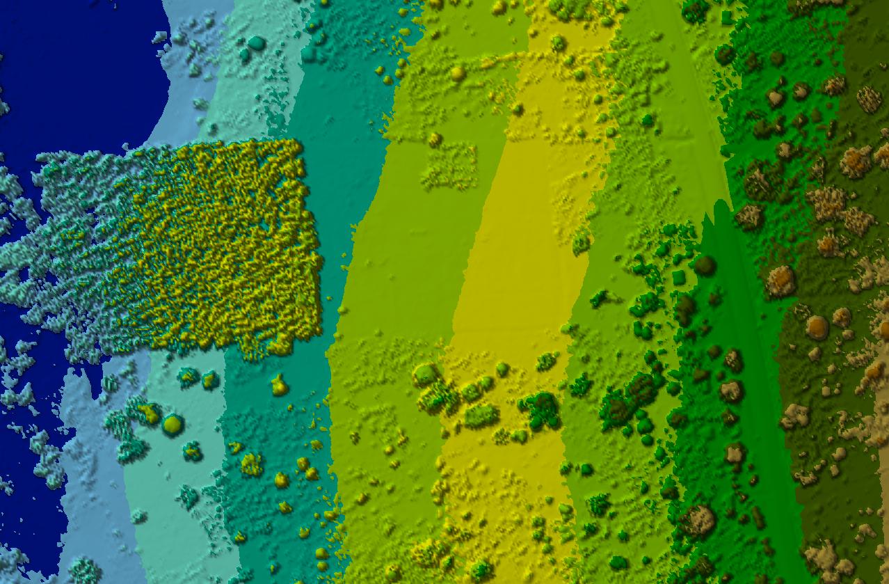 DSM showing terrain and plantation