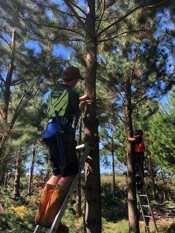 Pruning trees.jpg