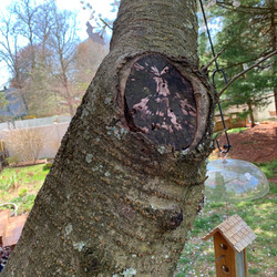 the_murffs-Tree_Bark