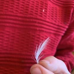 the_murffs-Feather