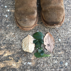 kdanner03-Types_of_Leaves