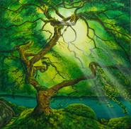 Sunrays through a Giant Maple Tree