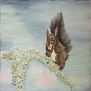 Squirel in Winter