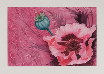 Poppy in Bloom