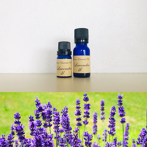 Lavender/ラベンダー