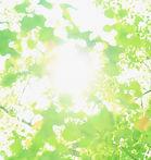 光の葉っぱ.jpg