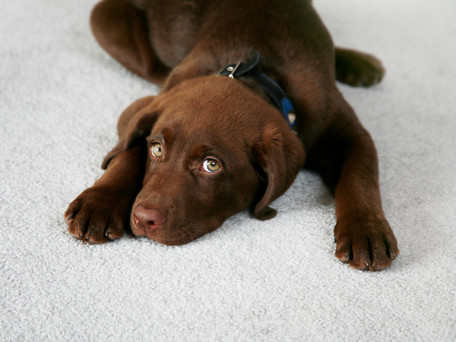 Tips on Choosing a New Pet after the Loss of One