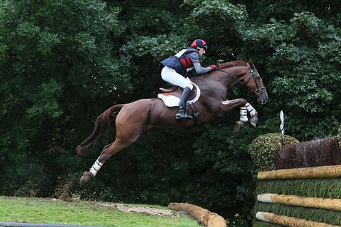 BUA STARTER EVENTING PACKAGE