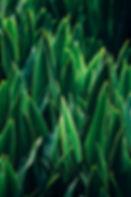 photo green.jpg