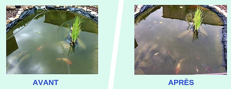 Un étang, avant-apres.png