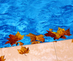 piscine automne 21