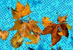 piscine automne21