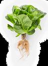 salad-3-roots.png