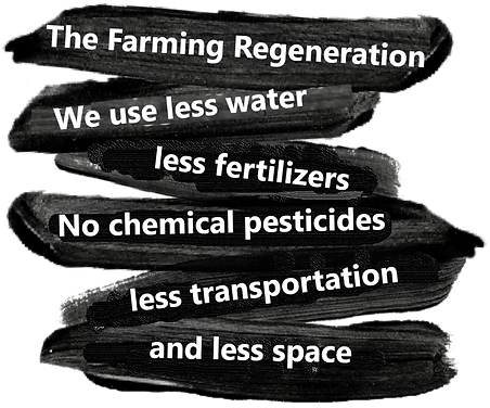 impact of regenerative farming.png