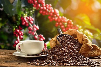bs-aus-coffee-farm-lrg.jpg