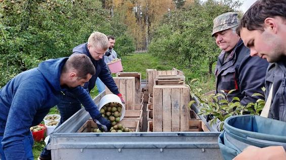 Jaunie augkopības tehniķi prasmes  apgūst saimniecībās un uzņēmumos