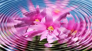 flower-110783_640.jpg