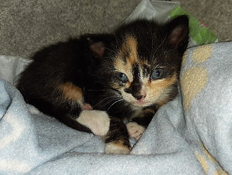 kitten1 neuenhunt 5.jpg