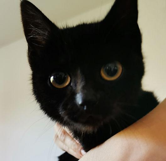 kitten schwarz schwei 4-22.jpg