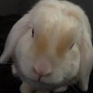 4-17 kaninchen.jpg