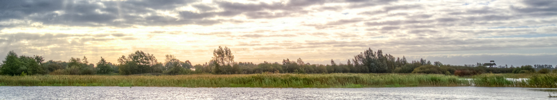 swamp-morning-water-reflection-633888_ed