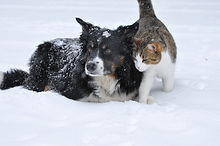 cat and dog snow.jpg