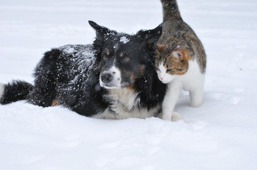 cat and dog snow.jpg