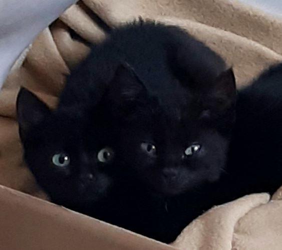 kitten bra 10-12.jpg