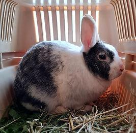 kaninchen einsw2 6-21.jpg