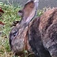 12-30 zwei Kaninchen.jpg