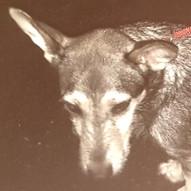 12-22 hund.jpg