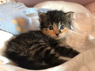 kitten2 neuenhunt 5.jpg